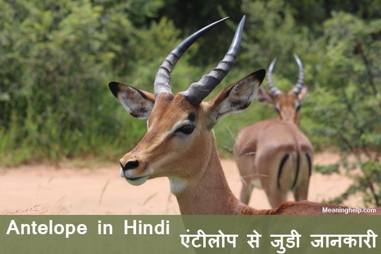 Photo of Antelope Meaning in Hindi – एंटीलोप से जुडी जानकारी